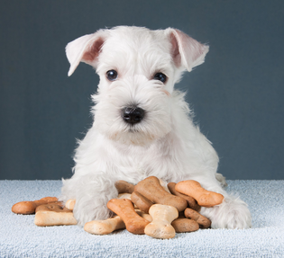 Factors to consider when choosing a dog food